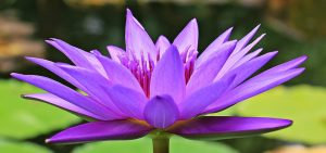 Mantra Singen im The Heart of Joy