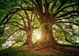 kostenlos meditation erlernen in mondsee
